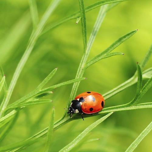 害虫识别APP开发有哪些优势和功能?